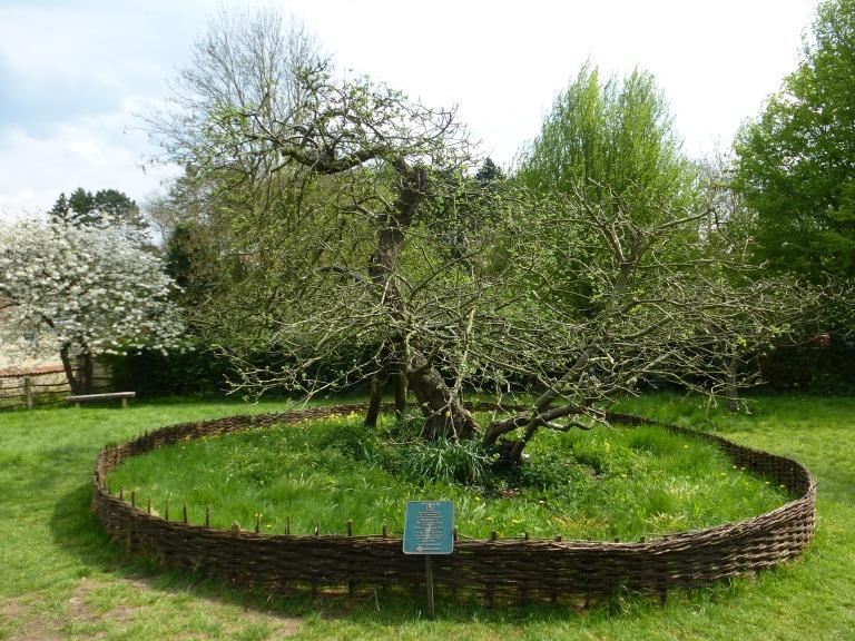 Woolsthorpe Manor - Isaac Newton Birthplace (147)